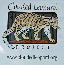Clouded Leopard Window Cling